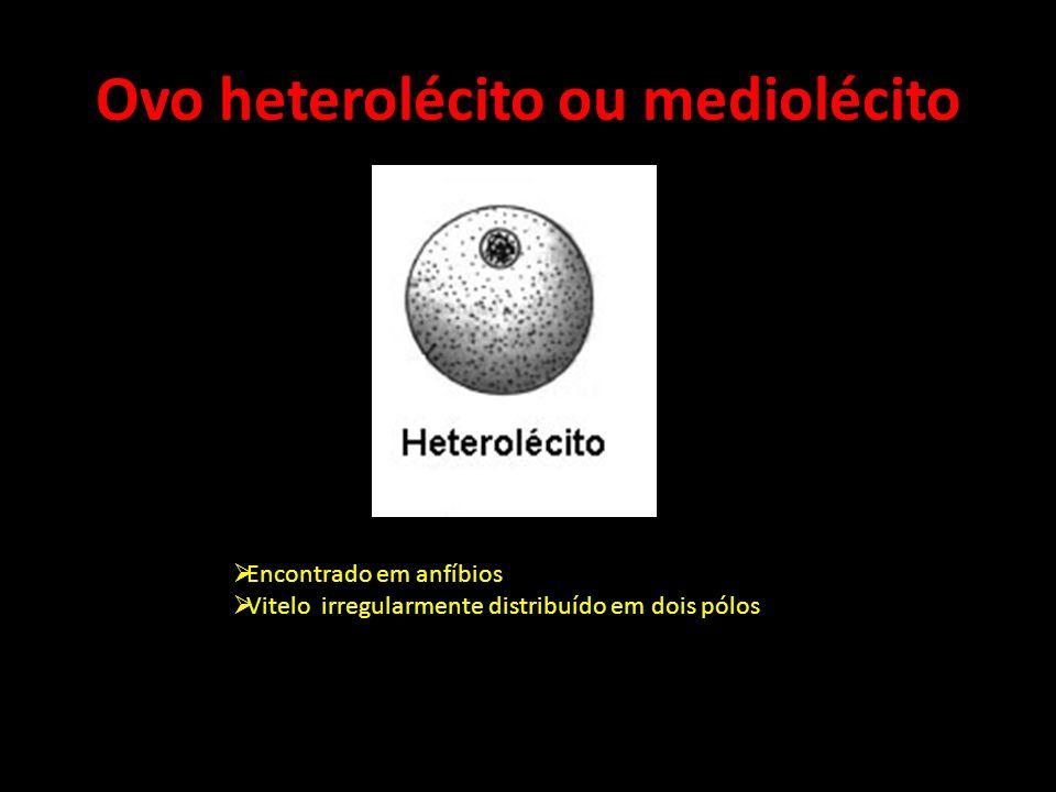Ovo heterolécito ou mediolécito
