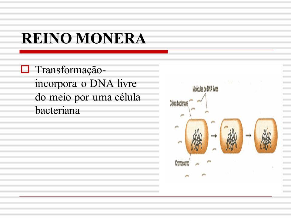 REINO MONERA Transformação-incorpora o DNA livre do meio por uma célula bacteriana