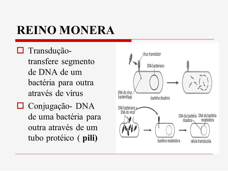 REINO MONERA Transdução- transfere segmento de DNA de um bactéria para outra através de vírus.