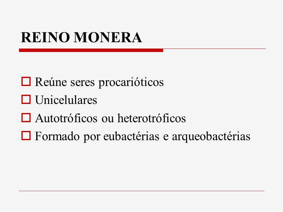 REINO MONERA Reúne seres procarióticos Unicelulares