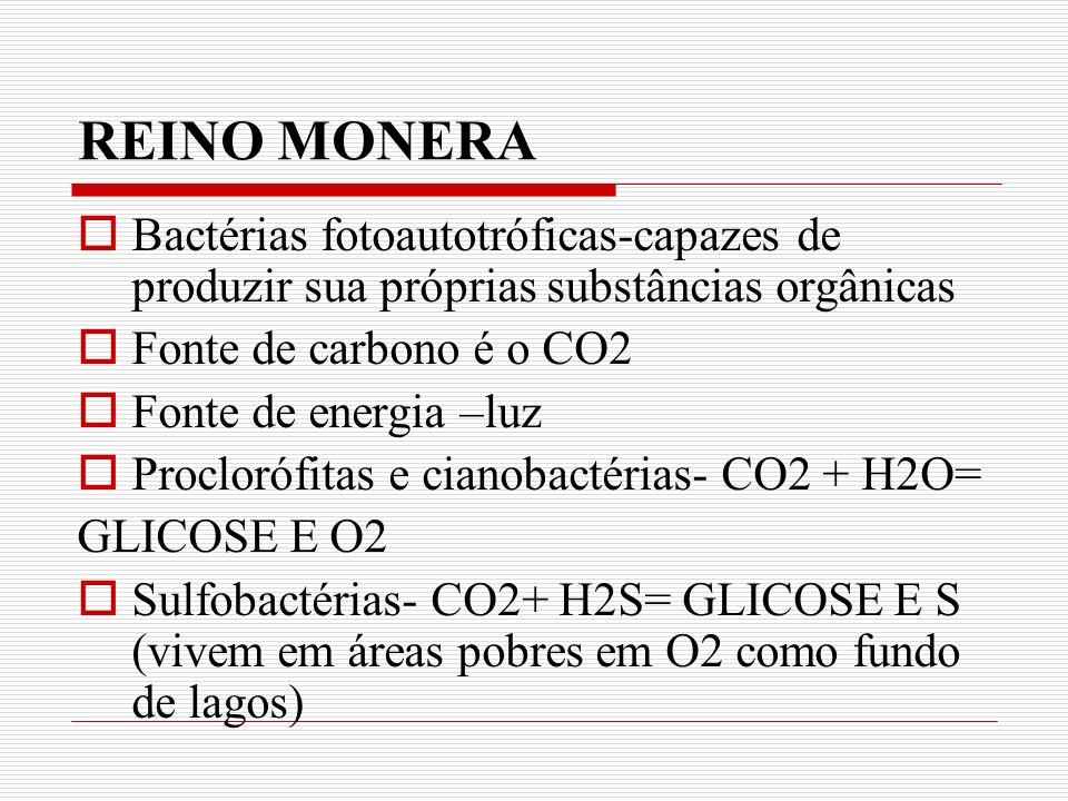REINO MONERA Bactérias fotoautotróficas-capazes de produzir sua próprias substâncias orgânicas. Fonte de carbono é o CO2.