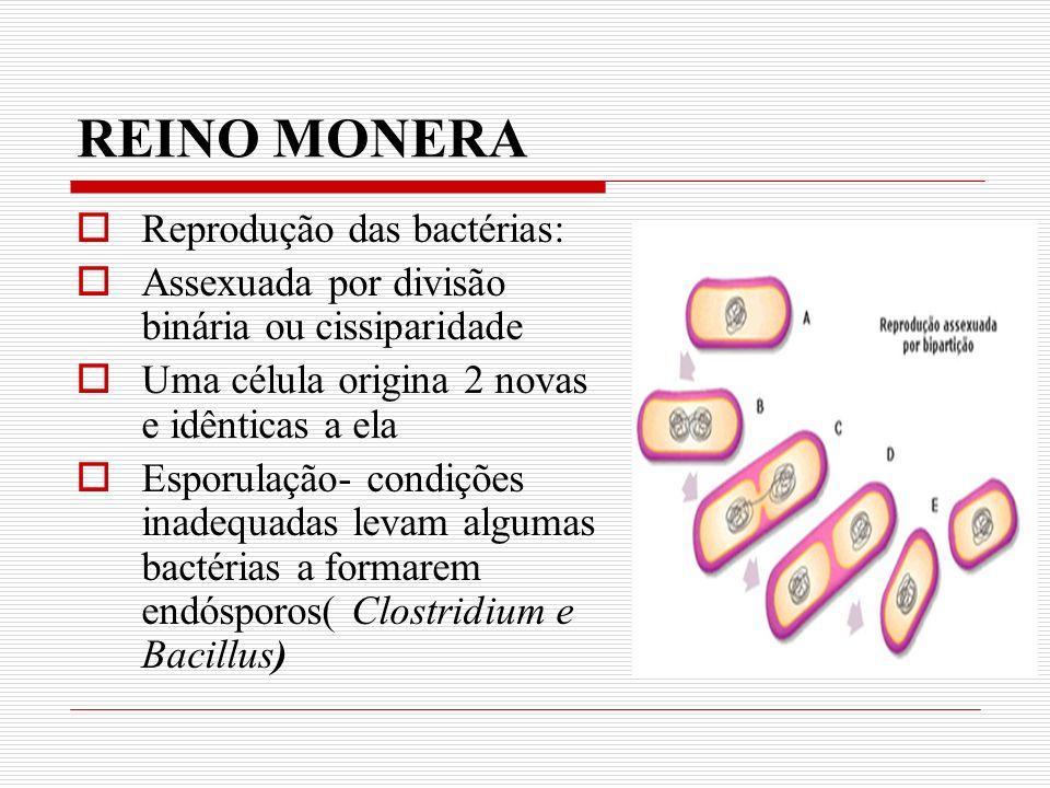 REINO MONERA Reprodução das bactérias: