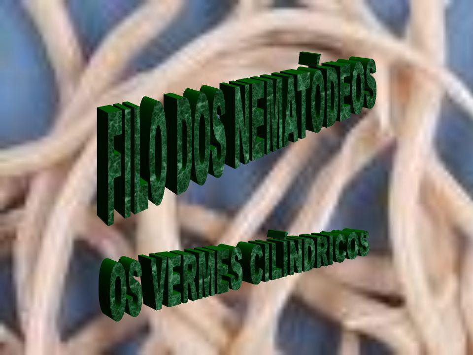 FILO DOS NEMATÓDEOS OS VERMES CILÍNDRICOS