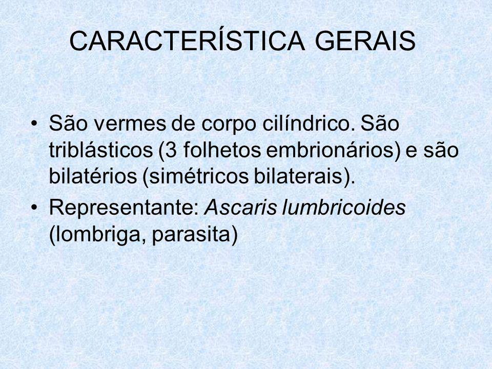 CARACTERÍSTICA GERAIS