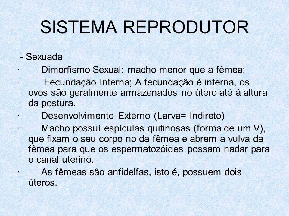 SISTEMA REPRODUTOR - Sexuada