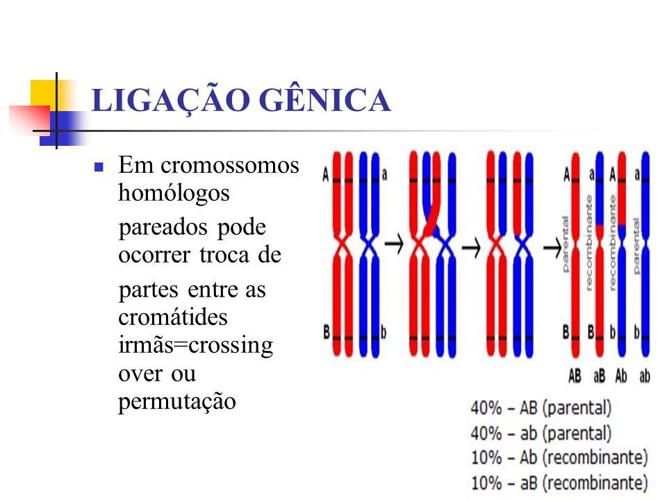LIGAÇÃO GÊNICA Em cromossomos homólogos pareados pode ocorrer troca de