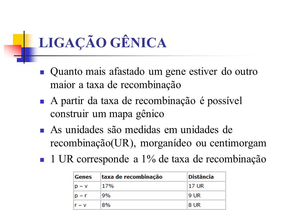 LIGAÇÃO GÊNICA Quanto mais afastado um gene estiver do outro maior a taxa de recombinação.