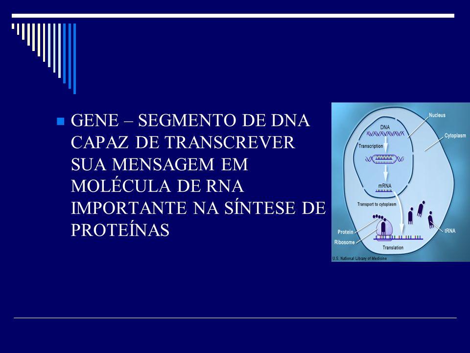 GENE – SEGMENTO DE DNA CAPAZ DE TRANSCREVER SUA MENSAGEM EM MOLÉCULA DE RNA IMPORTANTE NA SÍNTESE DE PROTEÍNAS