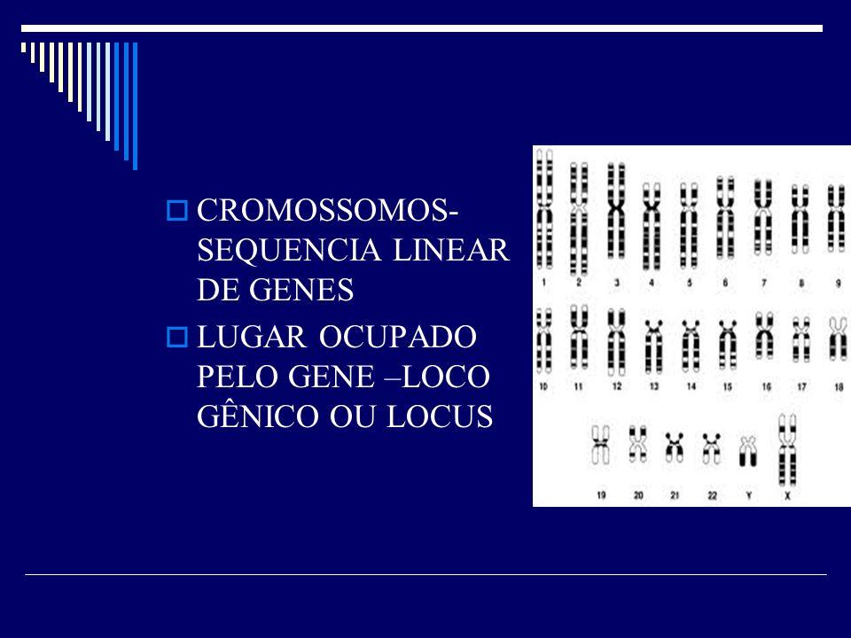 CROMOSSOMOS- SEQUENCIA LINEAR DE GENES
