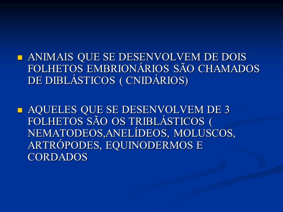 ANIMAIS QUE SE DESENVOLVEM DE DOIS FOLHETOS EMBRIONÁRIOS SÃO CHAMADOS DE DIBLÁSTICOS ( CNIDÁRIOS)