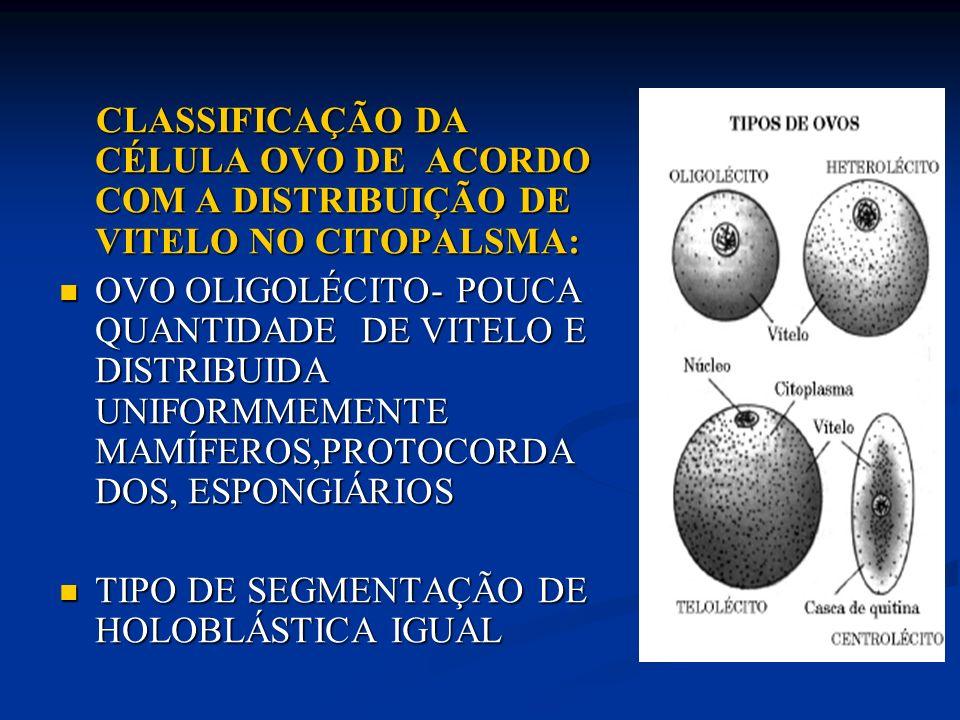 CLASSIFICAÇÃO DA CÉLULA OVO DE ACORDO COM A DISTRIBUIÇÃO DE VITELO NO CITOPALSMA: