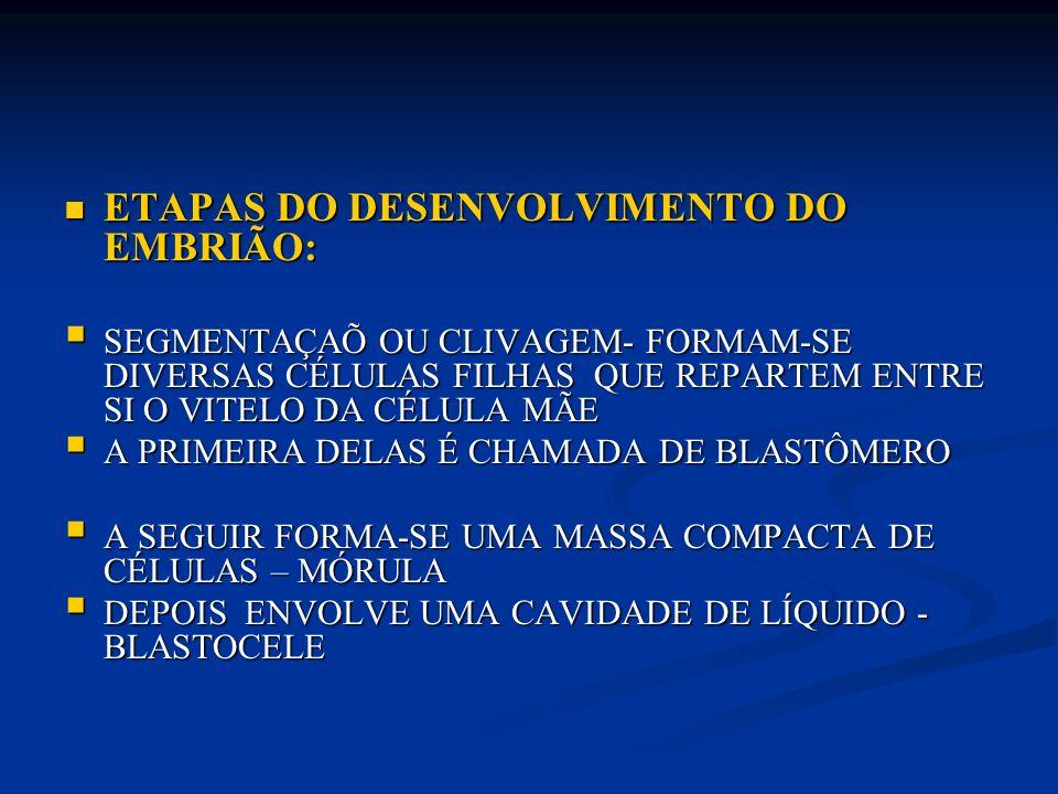 ETAPAS DO DESENVOLVIMENTO DO EMBRIÃO: