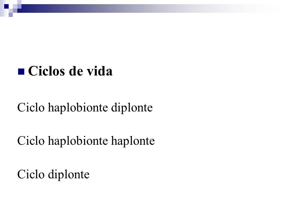 Ciclos de vida Ciclo haplobionte diplonte Ciclo haplobionte haplonte
