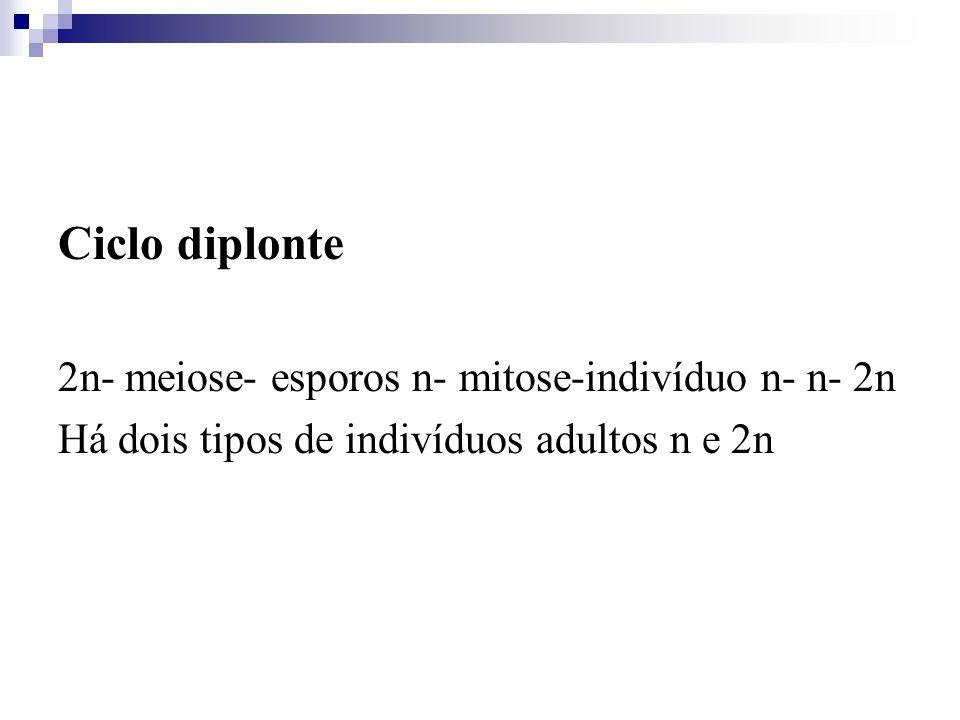 Ciclo diplonte 2n- meiose- esporos n- mitose-indivíduo n- n- 2n