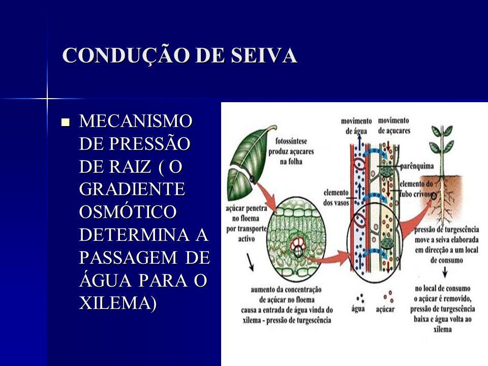 CONDUÇÃO DE SEIVAMECANISMO DE PRESSÃO DE RAIZ ( O GRADIENTE OSMÓTICO DETERMINA A PASSAGEM DE ÁGUA PARA O XILEMA)