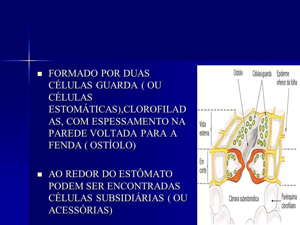 FORMADO POR DUAS CÉLULAS GUARDA ( OU CÉLULAS ESTOMÁTICAS),CLOROFILADAS, COM ESPESSAMENTO NA PAREDE VOLTADA PARA A FENDA ( OSTÍOLO)