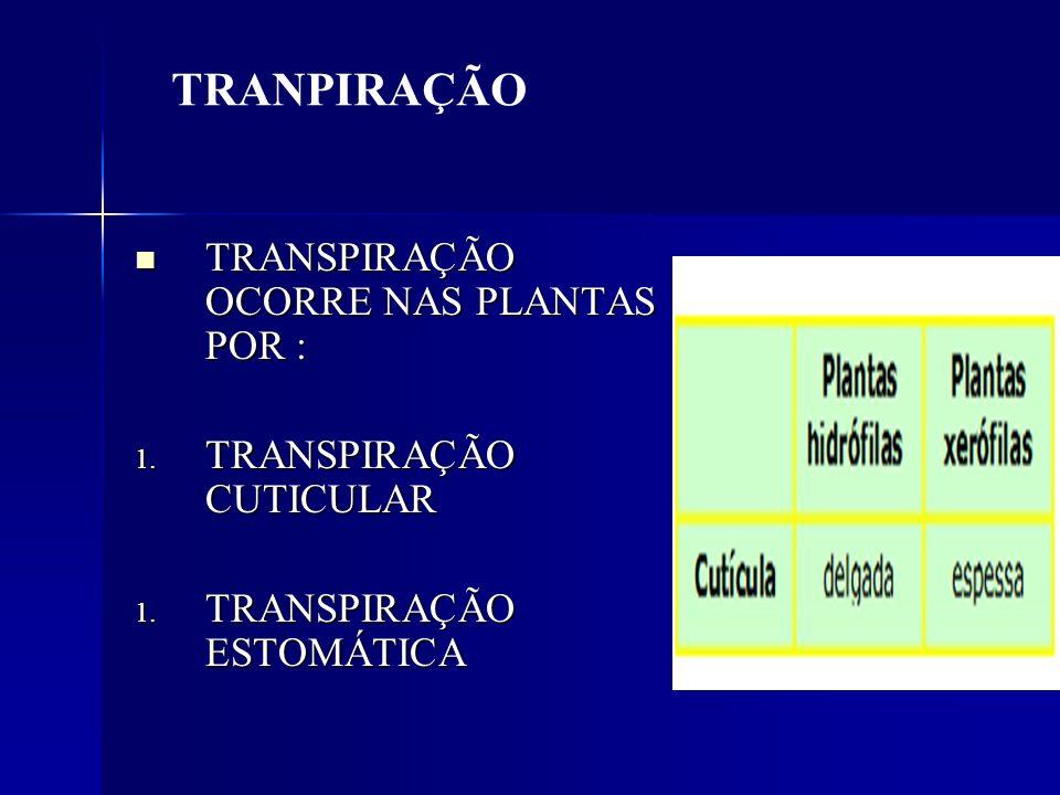TRANPIRAÇÃO TRANSPIRAÇÃO OCORRE NAS PLANTAS POR :