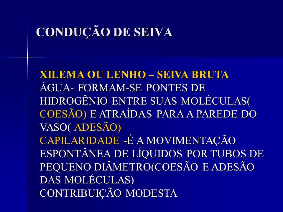 CONDUÇÃO DE SEIVA XILEMA OU LENHO – SEIVA BRUTA