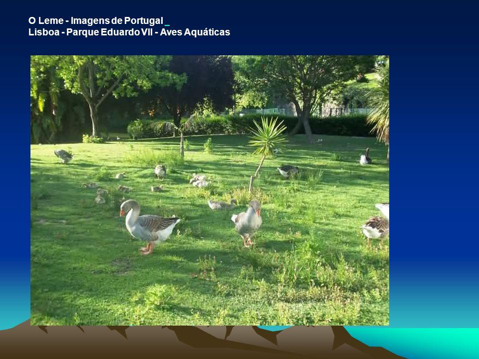 O Leme - Imagens de Portugal Lisboa - Parque Eduardo VII - Aves Aquáticas