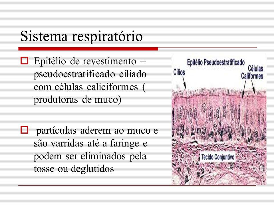 Sistema respiratório Epitélio de revestimento –pseudoestratificado ciliado com células caliciformes ( produtoras de muco)