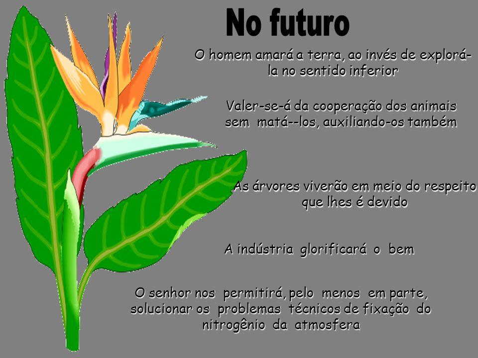 No futuro O homem amará a terra, ao invés de explorá-la no sentido inferior.