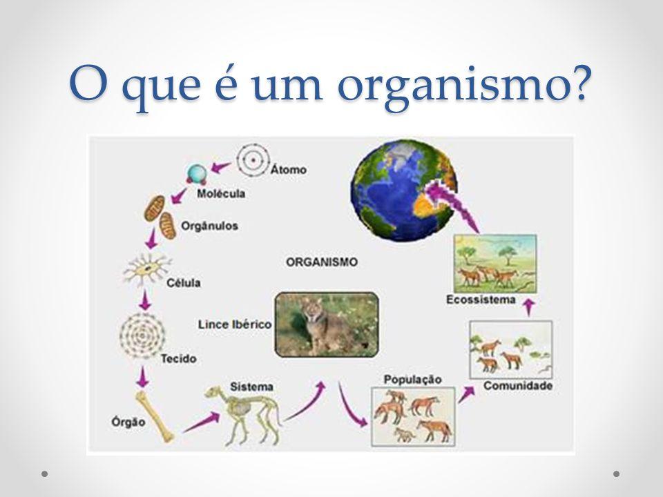 O que é um organismo