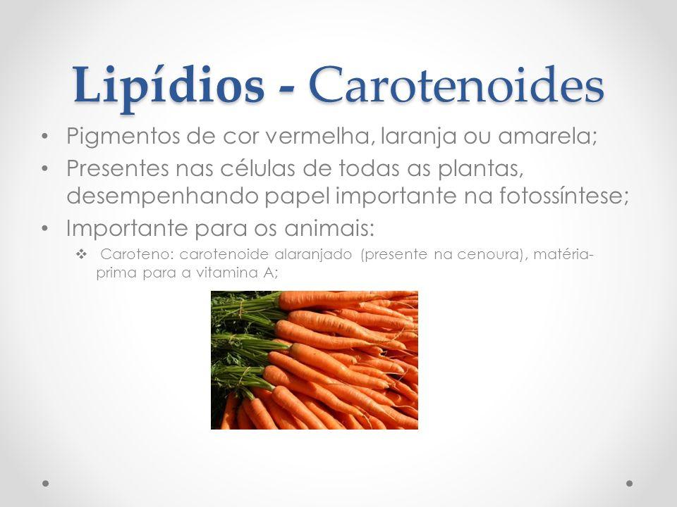 Lipídios - Carotenoides