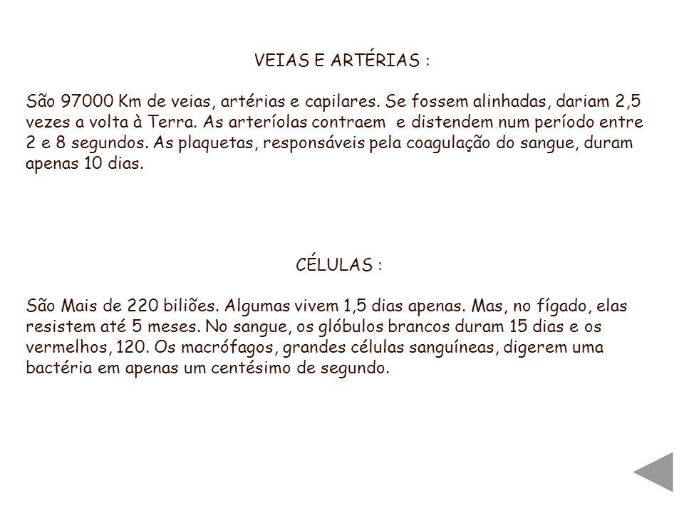 VEIAS E ARTÉRIAS :