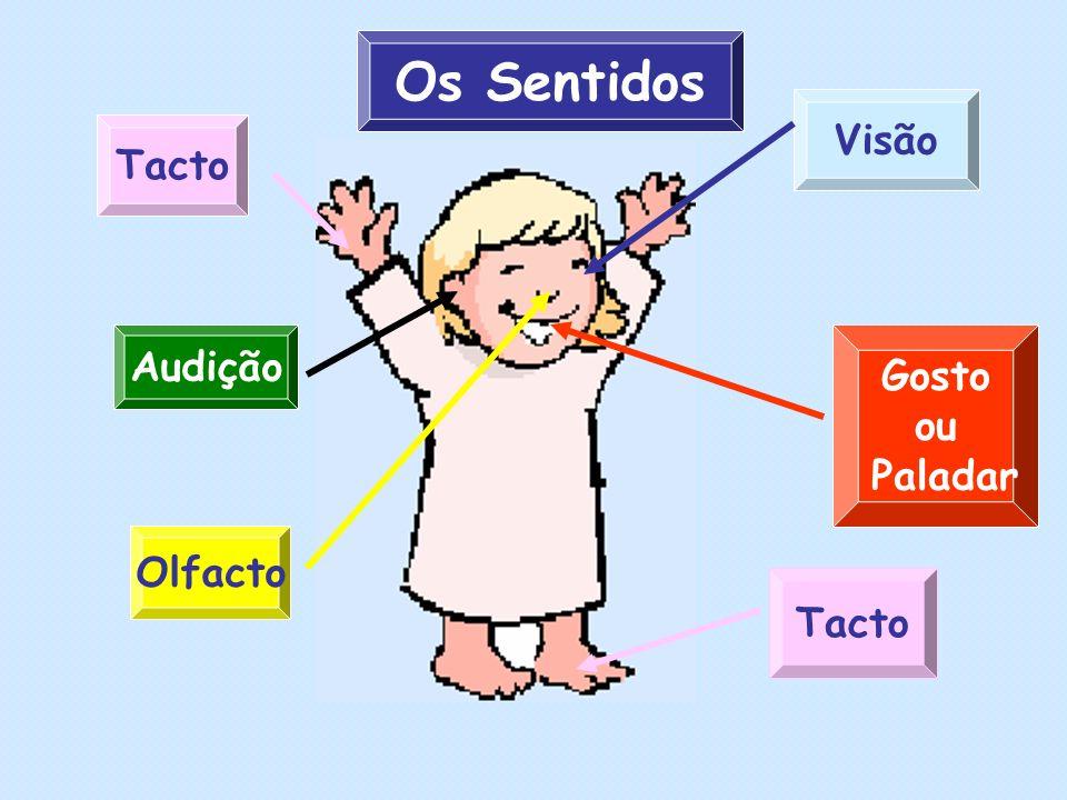 Os Sentidos Visão Tacto Audição Olfacto Gosto ou Paladar
