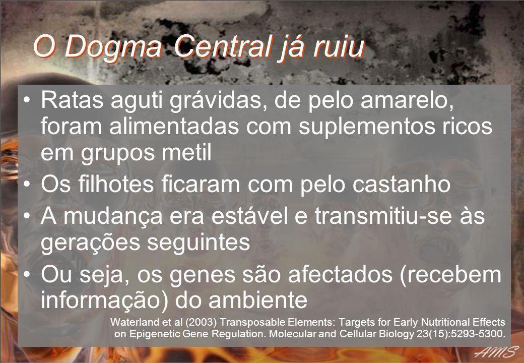 O Dogma Central já ruiu Ratas aguti grávidas, de pelo amarelo, foram alimentadas com suplementos ricos em grupos metil.