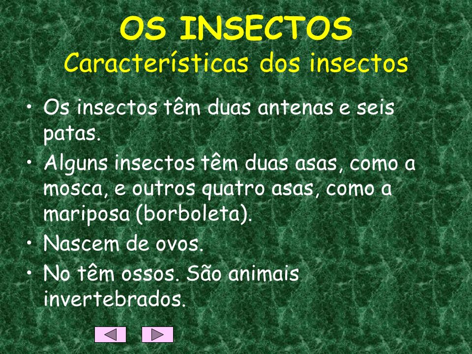 OS INSECTOS Características dos insectos