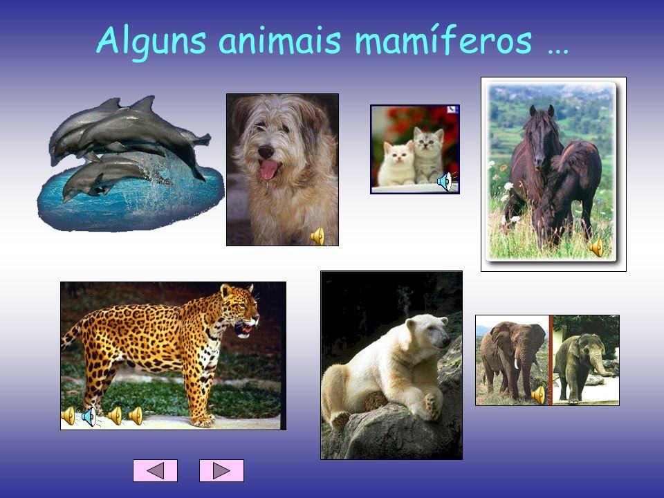 Alguns animais mamíferos …