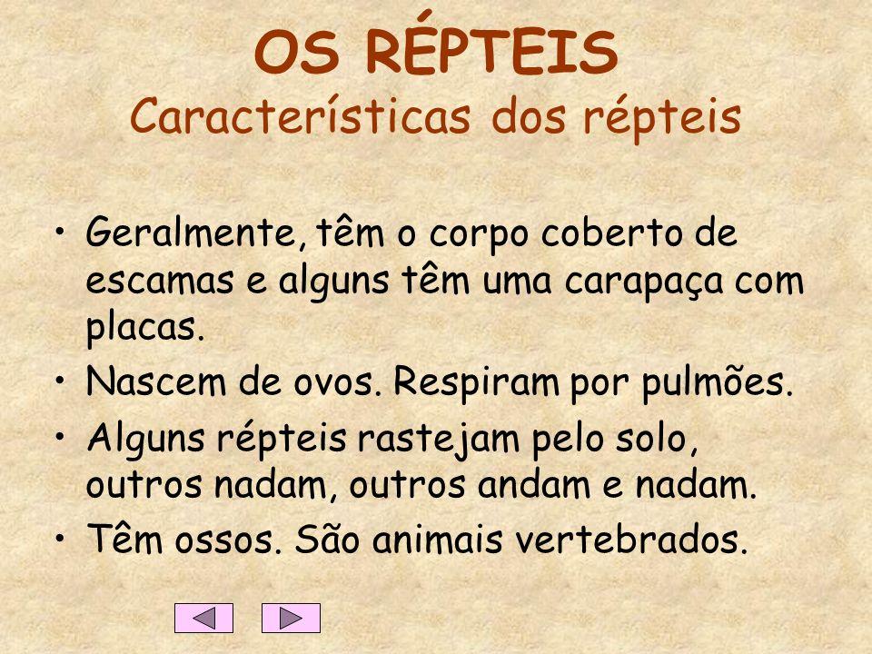 OS RÉPTEIS Características dos répteis