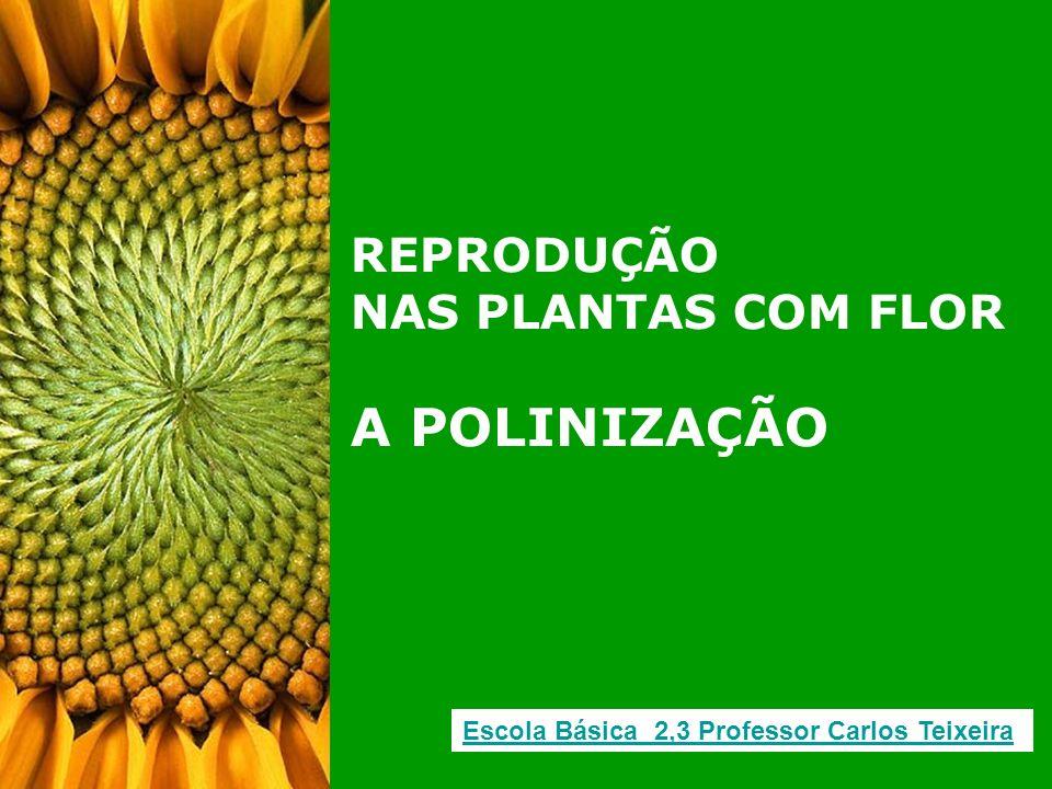 A POLINIZAÇÃO REPRODUÇÃO NAS PLANTAS COM FLOR