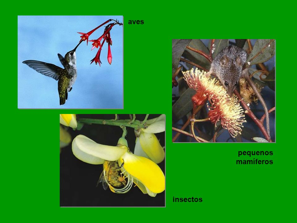 aves pequenos mamíferos insectos
