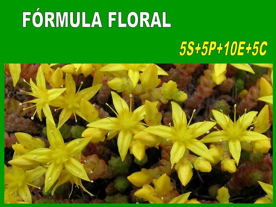 FÓRMULA FLORAL 5S+5P+10E+5C