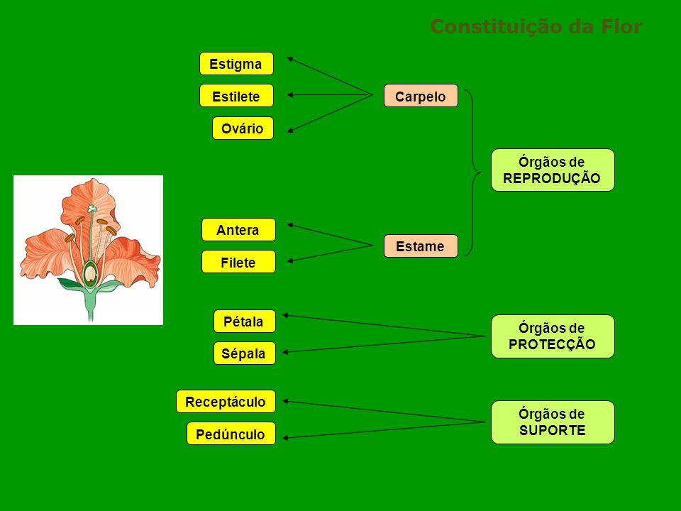 Constituição da Flor Estigma Estilete Carpelo Ovário