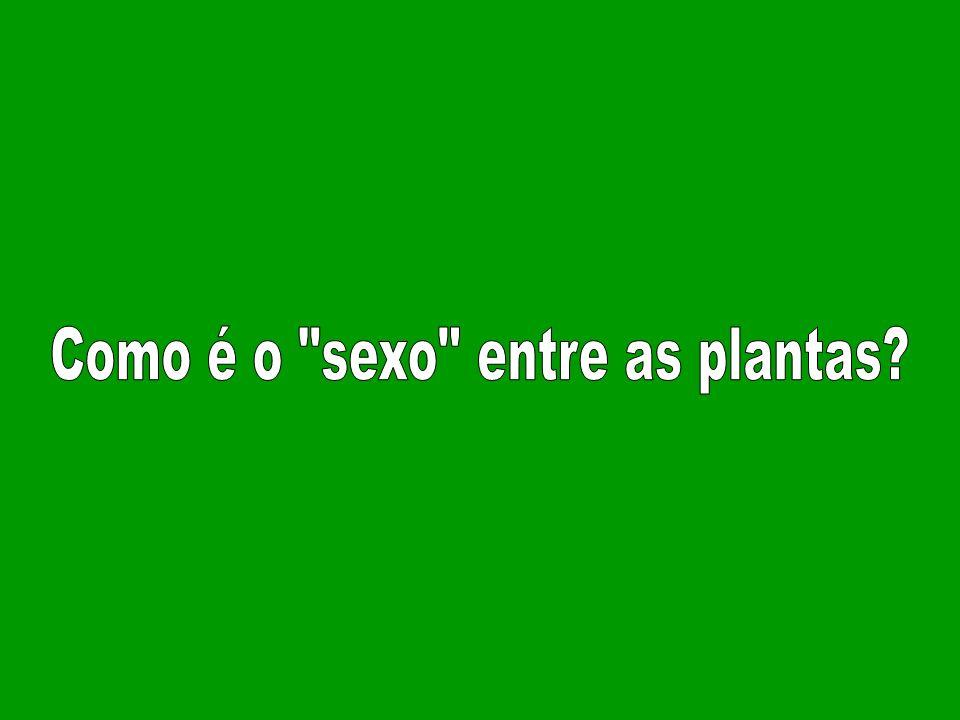 Como é o sexo entre as plantas