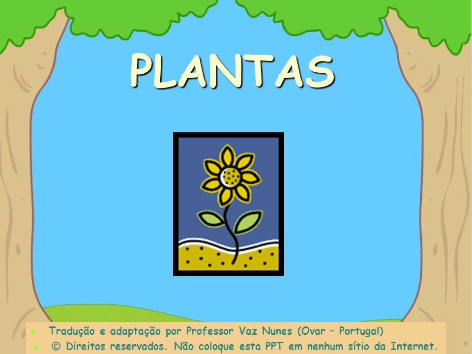 PLANTAS Tradução e adaptação por Professor Vaz Nunes (Ovar – Portugal)
