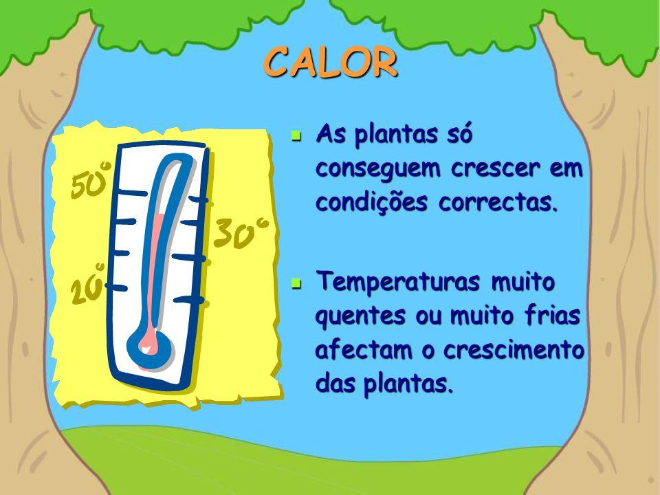 CALOR As plantas só conseguem crescer em condições correctas.