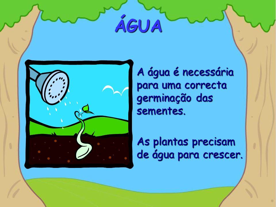 ÁGUA A água é necessária para uma correcta germinação das sementes.