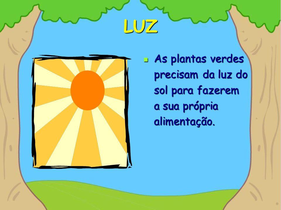 LUZ As plantas verdes precisam da luz do sol para fazerem a sua própria alimentação.