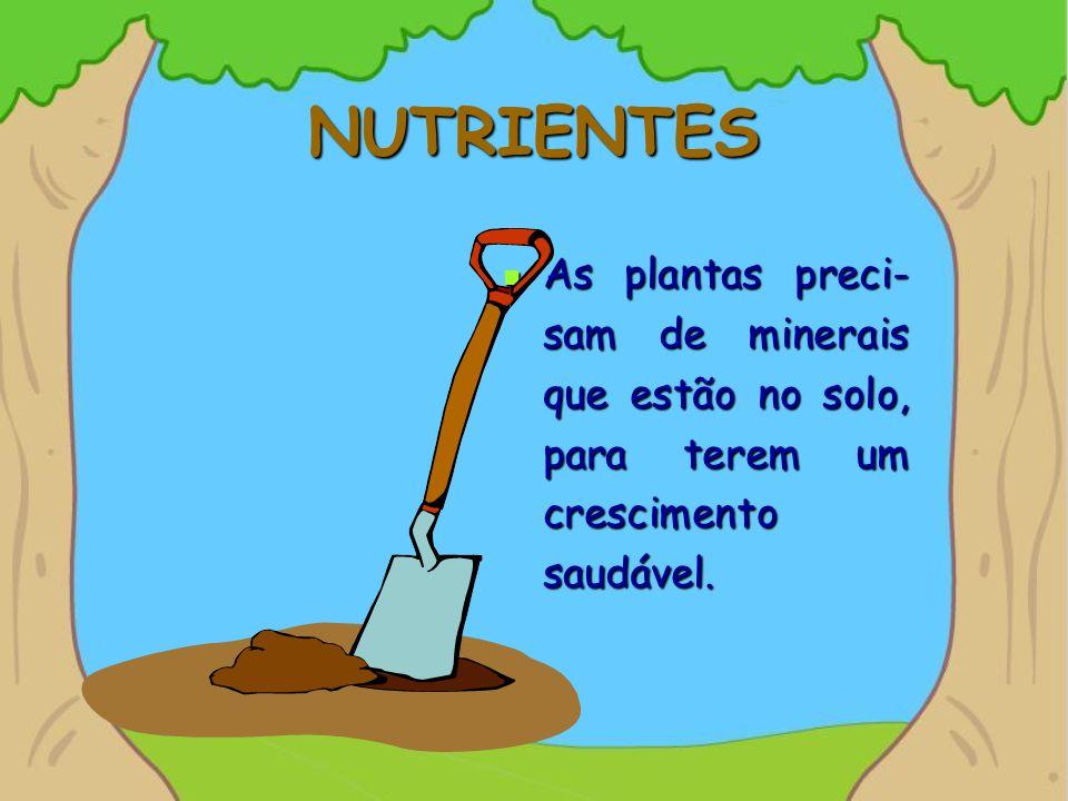 NUTRIENTES As plantas preci-sam de minerais que estão no solo, para terem um crescimento saudável.