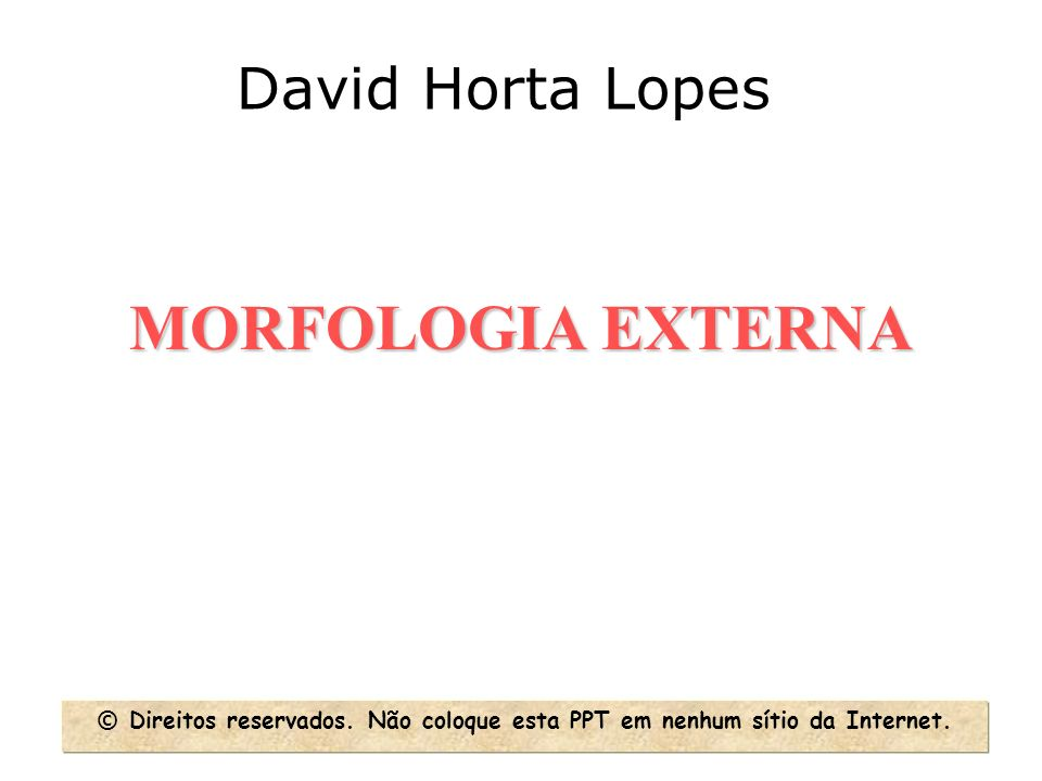 MORFOLOGIA EXTERNA David Horta Lopes