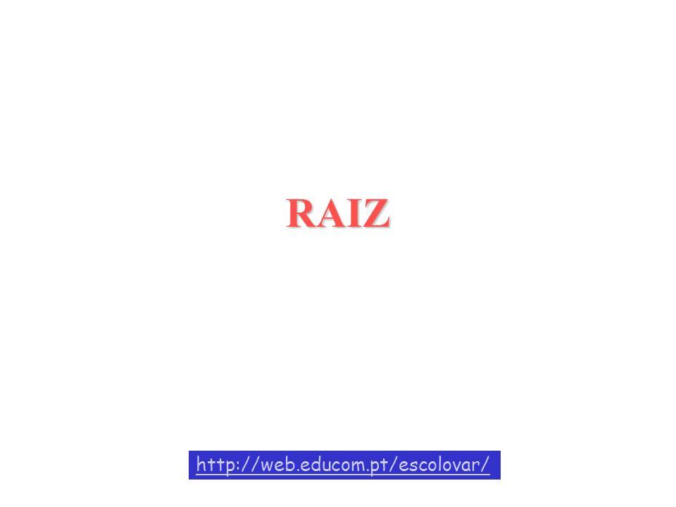 RAIZ http://web.educom.pt/escolovar/