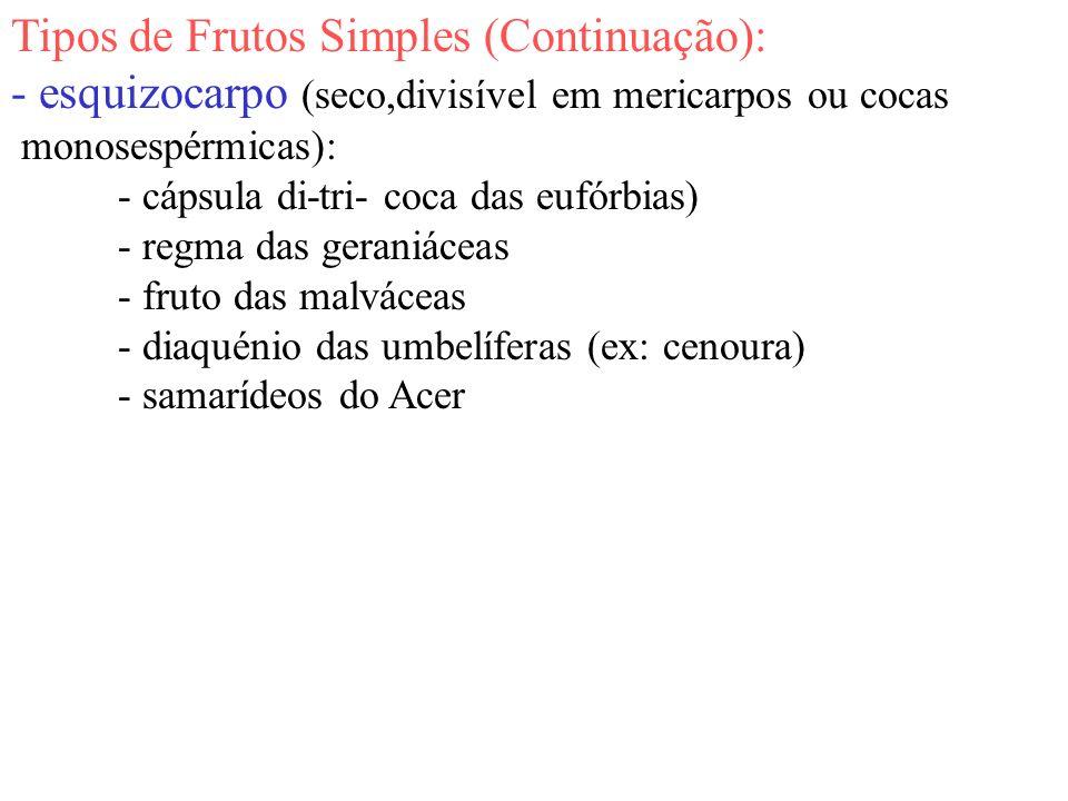 Tipos de Frutos Simples (Continuação):