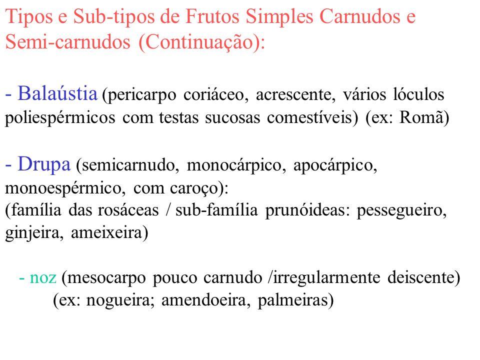 Tipos e Sub-tipos de Frutos Simples Carnudos e