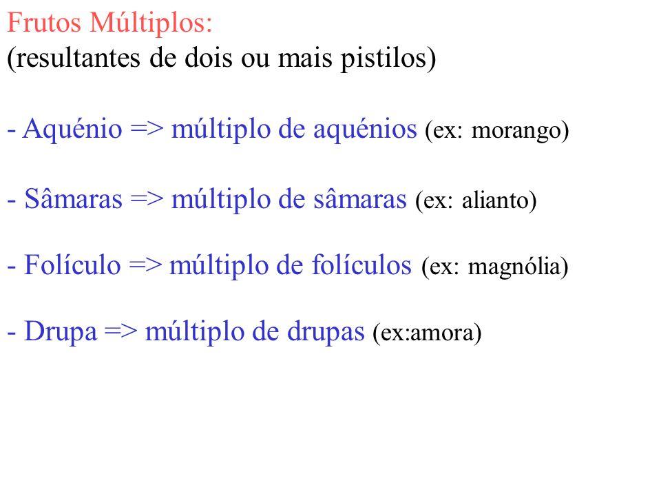 Frutos Múltiplos: (resultantes de dois ou mais pistilos) - Aquénio => múltiplo de aquénios (ex: morango)