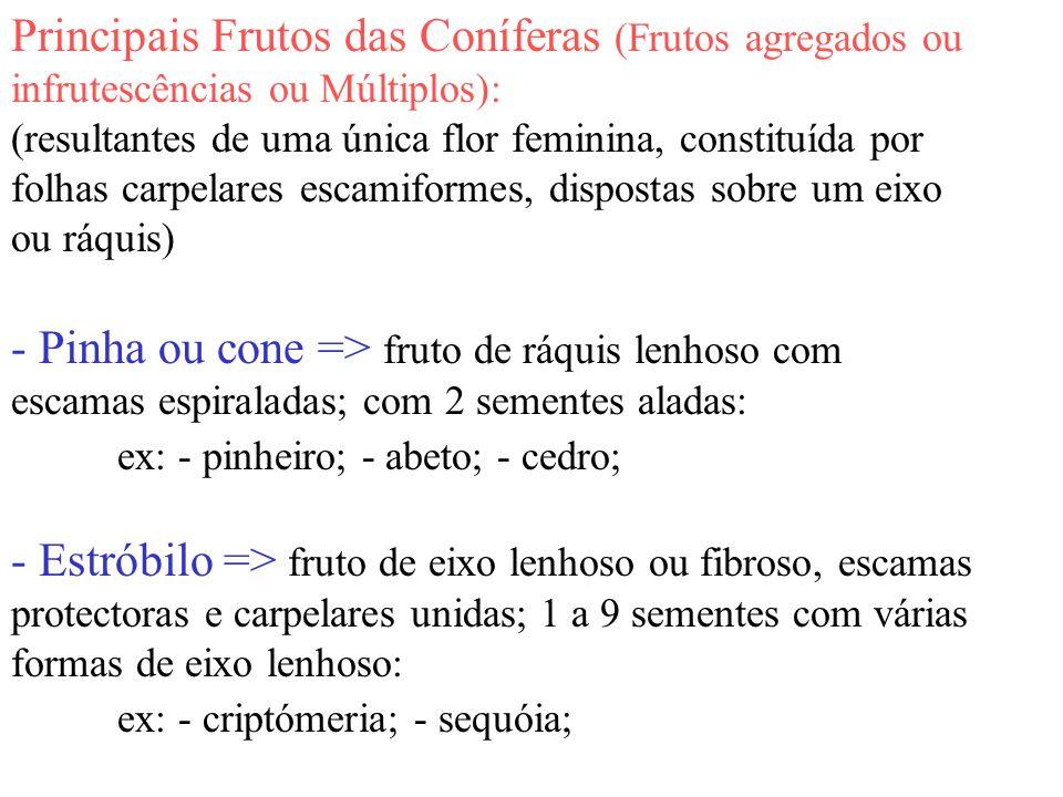 Principais Frutos das Coníferas (Frutos agregados ou