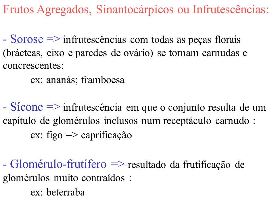 Frutos Agregados, Sinantocárpicos ou Infrutescências:
